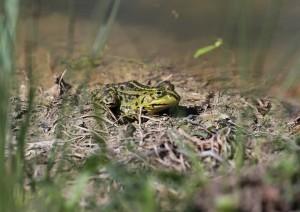 Biotop-Pflege Golf Natur Kopie